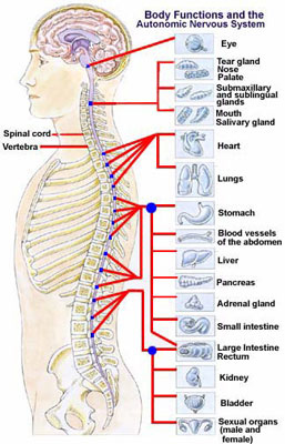 nerve chart - pain relief specialist
